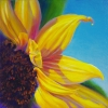 bright-yellow-sunflower
