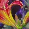 daylily-slice1-web