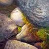 rocks-moss-web