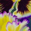 yello-pansy-double-wp-web