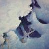 winter-spruce-wpweb