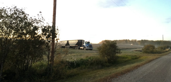Truck is waiting for more canola seeds!