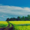 dirt-road-canola