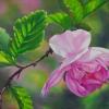 flirtatious-plum-flower-web