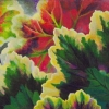 geranium-leaves-web