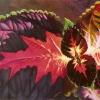 elemental-voices-2web