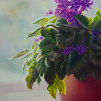 violets-in-window-websize