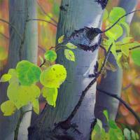 aspen-trunks-web