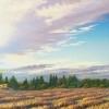 harvest-crunch-time2