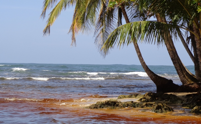 This was taken near the Manzanillo conservation area. The brown color comes from the tannin released by the vegetation in the fresh water streams run into the ocean.
