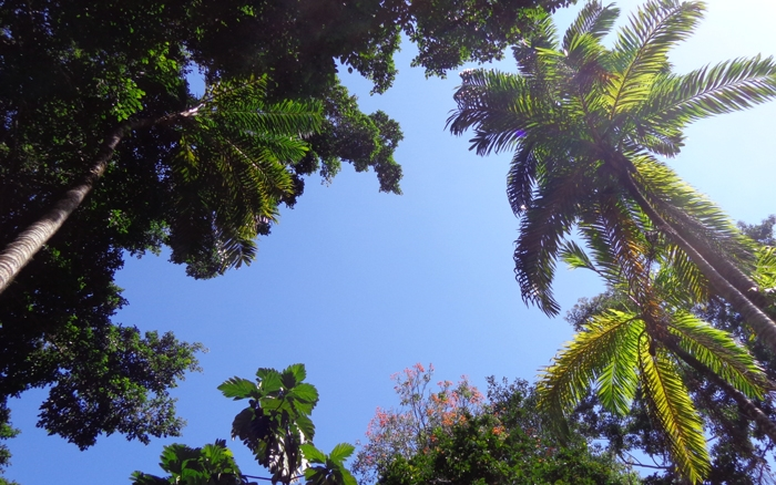Looking up in the back yard at the house in Costa Rica. The temperature was generally around 29 C