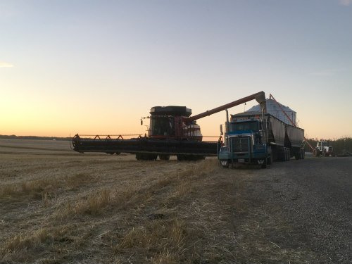 Here, Shane is unloading the combine hopper full of wheat that was grown on the home quarter.