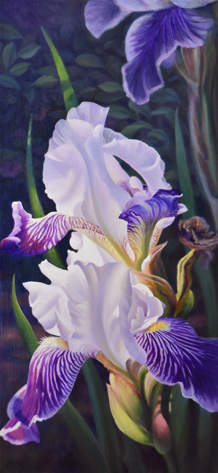 three white and purple irises painted realistically