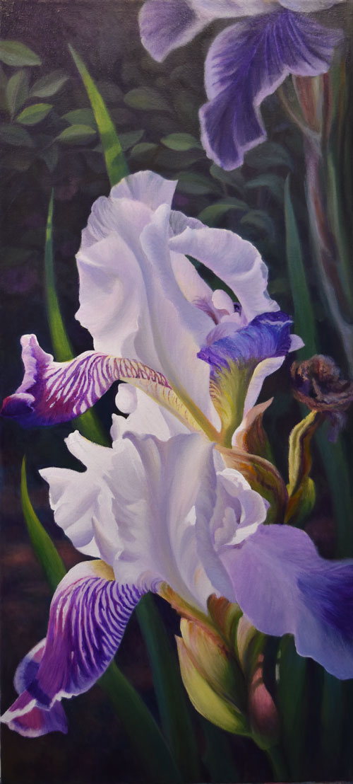 painting of white and purple iris flower