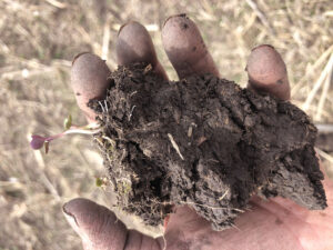 hand holding black dirt